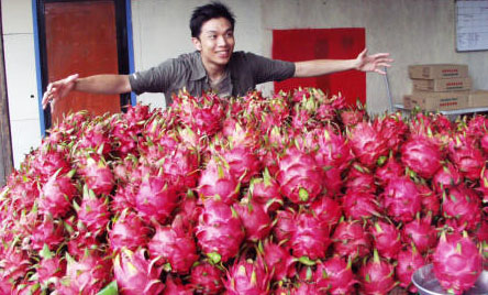 dragon fruit on the market