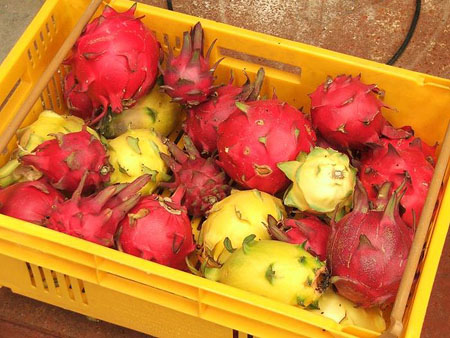 Red and yellow pitaya