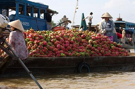 dragonfruit boat